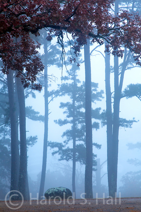Fog rolls in around The Great Smoky Mountains Tennessee.