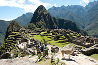 The llama (Lama glama) is a South American camelid, widely used as a pack and meat animal by Andean cultures since pre-hispanic times. For the Inca nobility the llama was of symbolical significance and llama figures were often buried with the dead.