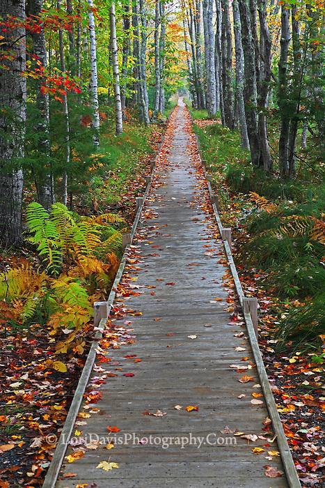 Strolling Through Autumn  #A97