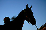 A racehorse is washed following a morning workout at Churchill Downs in Louisville, Kentucky on May 4, 2006...