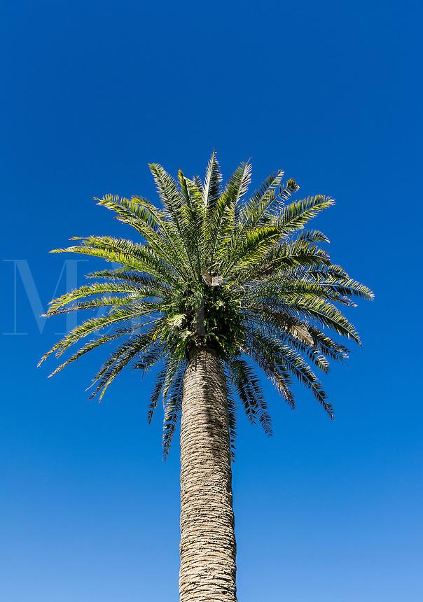 Healthy lone palm tree.