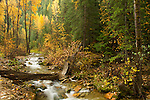 Idaho, North, Wallace. Autumn color along big Creek in the St. Joe National Forest.