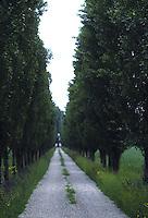 Tuscan road<br />