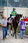 February 21, 2015: Class Leader with James Graham up in the Mineshaft Handicap at the New Orleans Fairgrounds Risen Star Stakes Day. Steve Dalmado/ESW/CSM