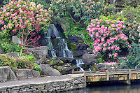 Pond and waterfall with bloominmg rhododendrons at Crystal Gardens. Portland, Oregon