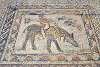 Roman mosaic in the House of the Athlete or Desultor, located near the forum, contains a humorous mosaic of an athlete or acrobat riding a donkey back to front while holding a cup in his outstretched hand. It may possibly represent Silenus also known as the wine God Dionysus or Bacchus. Volubilis Archaeological Site, near Meknes, Morocco