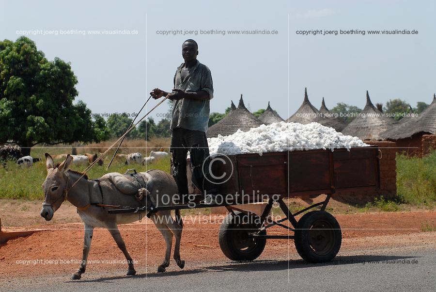 MALI Bougouni, transport of fair trade and organic cotton after harvest with donkey cart / MALI Fairtrade und Biobaumwolle Projekt, Transport der Baumwolle vom Feld ins Dorf mit Eselskarren