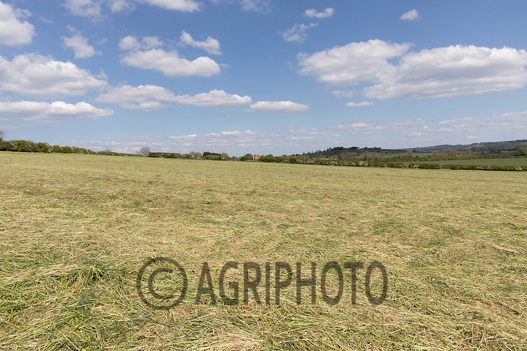 Cut silage waiting to be bailed and wrapped <br /> ©Tim Scrivener Photographer 07850 303986<br />      ....Covering Agriculture In The UK....