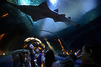 Ocean Park theme park is the premier attraction of Hong Kong.  It is ironic that tourists go and marvel at the sharks and then go to JUMBO Seafood restaurant and order shark fins at their next stop...The aquarium and theme type park Ocean Park in HK has many HHW in a very large tank... as well as sharks, rays etc.. etc....It is one of the few places you will see a large fish - certainly there are few in Indonesia says Yvonne Sadovy..Suzanne Gendron is in charge of the natural history side of Ocean Park.  Her email (suzanne.gendron@oceanpark.com.hk) and her mobile phone (+852 9151-8076)..Her senior aquarium supervisor is Yvonne Lim Sheu Shyan.Yvonne.lim@oceanpark.com.hk.Yvonne Mobile is 6153 8657..If any photos are published of me taken from outside the tank, Yvonne should get the credit line...Initially reef fish only came from the South China Sea, but transport developed and fish now come from all over S.E. Asia.  The whole reef fish trade crashed with the 97-98 HK stock market crash.  LRF trade is directly linked to economy.  With China coming online financially the trade is booming.  These fish are used for celebratory meals... not everyday fare.  In China the company pays for meals and the stereotype is that there is lots of food left on the table.  Often a fish is popular because of its color... more than its taste.