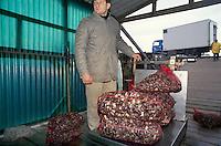 - cooperative for clams marketing in Scardovari (Rovigo)....- cooperativa per la commercializzazione delle vongole a Scardovari (Rovigo)