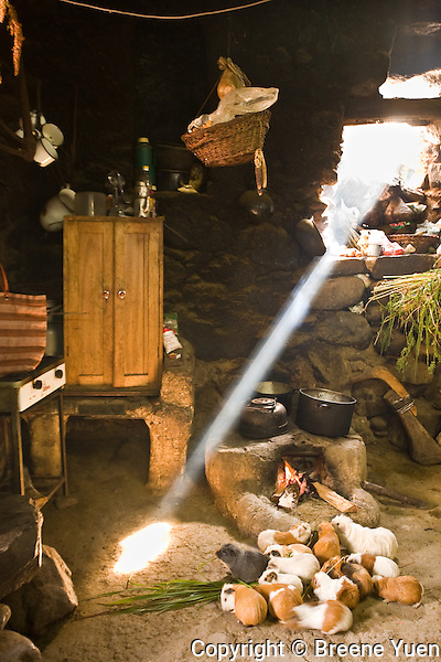 A native rural kitchen in Sacred Valley, Peru.  Note that Guinea Pigs are a food source for residents of the High Andean region.