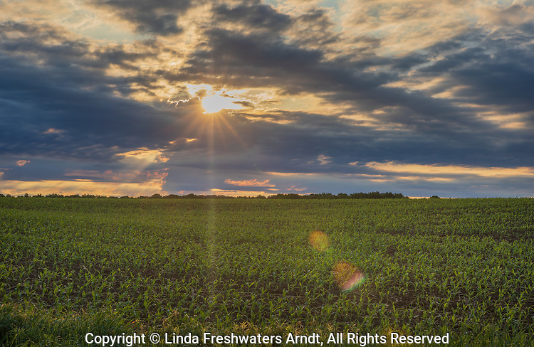 Sunrise over a corn field in northern Wisconsin.