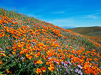 California State Poppie Reserve in Lancaster, California