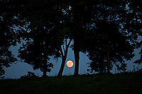 The moon rises between trees in Albemarle County or Charlottesville, Virginia. .