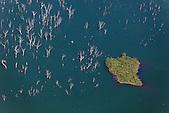 Forêt noyée, lac de Yaté