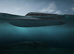 Pictured:  CGI of VICTA which is being built at SubSea Craft's Design & Engineering Centre in Havant, Hants.<br /> <br /> The first pictures of the world's most technically advanced submersible boat have finally been revealed.  The revolutionary British made VICTA, which looks like something straight out of a James Bond film, is specifically designed for the special forces. <br /> <br /> Capable of operating both on and under the water, VICTA combines the characteristics of a speedboat with those of a specialist submersible.  Its performance in both domains, and the ability to rapidly transition between the two, is enabled by a unique 'fly-by-wire' control system, which gives stability whatever the conditions. SEE OUR COPY FOR DETAILS.<br /> <br /> © SubSea Craft/Solent News & Photo Agency<br /> UK +44 (0) 2380 458800