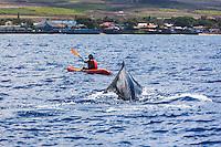 A kayaker has a close encounter with a humpback whale off the coast of Maui.