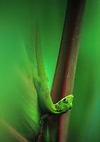 small gecko on leaf