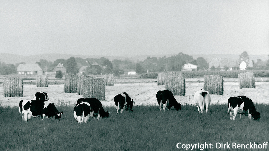Landwirtschaft in der Wedeler Marsch, Schleswig-Holstein, Deutschland 1980
