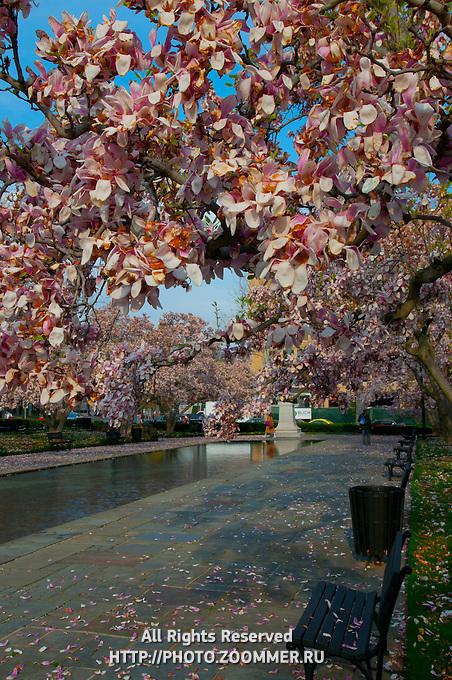 Rawlins Park in Washington DC