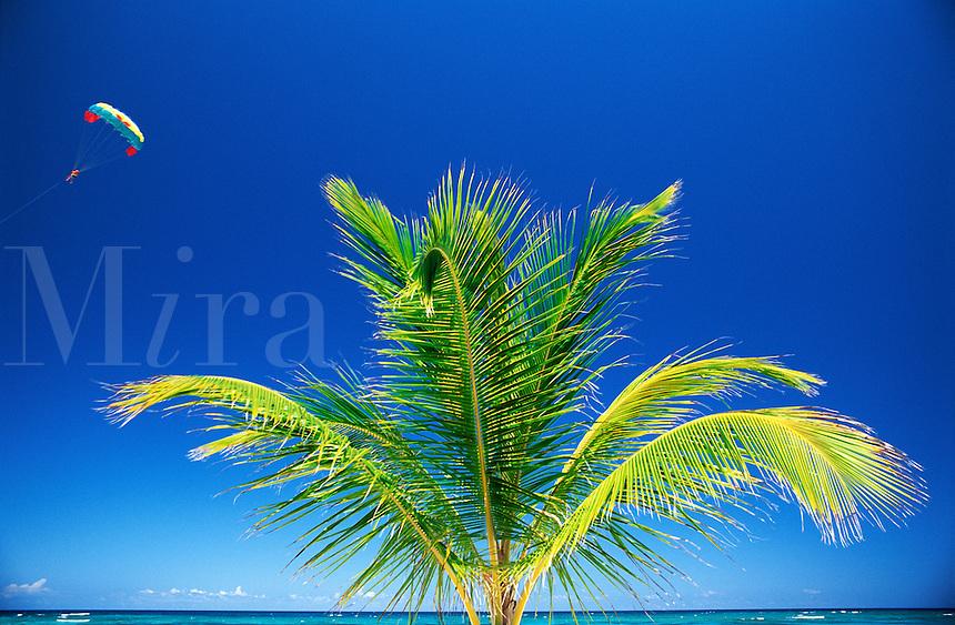 Dominican Republic, Punta Cana, Bavaro Beach. Palm tree and sky with parasail