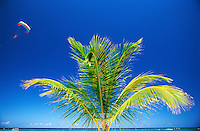 Dominican Republic, Punta Cana, Bavaro Beach. Palm tree and sky with parasail