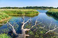 Umgestürzter Baum an der Oder, Oder-Neiße-Radweg, Reitwein, Oderbruch, Märkisch Oderland, Brandenburg, Deutschland