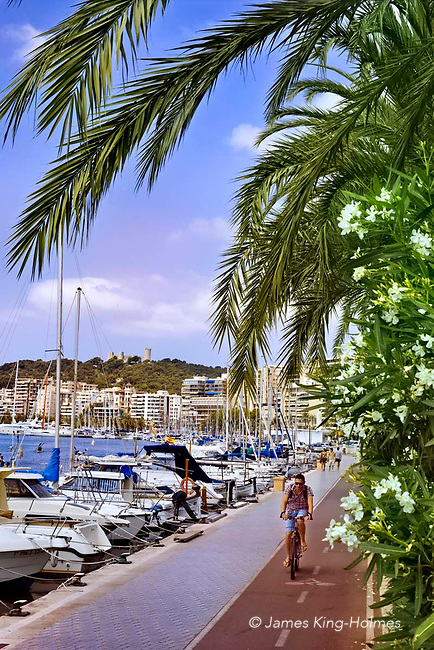Palm trees and white hibiscus border the waterside path for walking and cycling, alongside the boats in the marina at Palma de Mallorca.