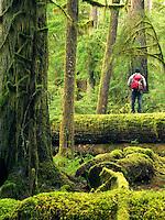 Hiker on log. Opal Creek Wilderness, Oregon