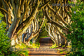 Tom Mackie, LANDSCAPES, LANDSCHAFTEN, PAISAJES, photos,+Belfast, County Antrim, Dark Hedges, Europe, Game of Thrones, Ireland, Irish, Northern Ireland, Tom Mackie, UK, antrim, atmos+phere, atmospheric, avenue, dramatic outdoors, horizontal, horizontals, lane, path, pathway, pathways, road, roadway, tree, t+rees,Belfast, County Antrim, Dark Hedges, Europe, Game of Thrones, Ireland, Irish, Northern Ireland, Tom Mackie, UK, antrim,+atmosphere, atmospheric, avenue, dramatic outdoors, horizontal, horizontals, lane, path, pathway, pathways, road, roadway, tr+,GBTM180390-1,#l#, EVERYDAY