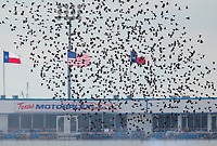Oct 20, 2019; Ennis, TX, USA; Birds flock and fly over the track during the NHRA Fall Nationals at the Texas Motorplex. Mandatory Credit: Mark J. Rebilas-USA TODAY Sports
