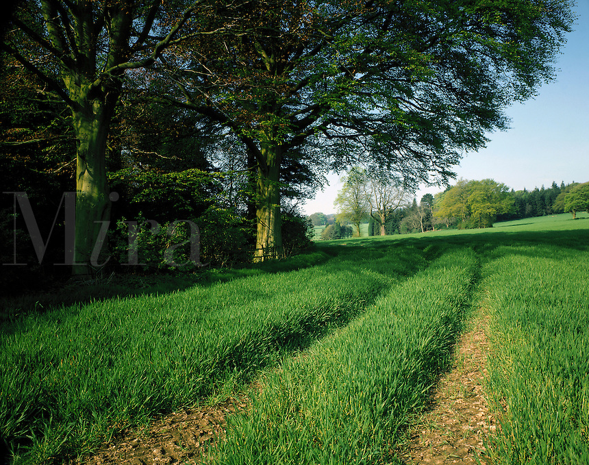 A rural pathway in Great Britian..