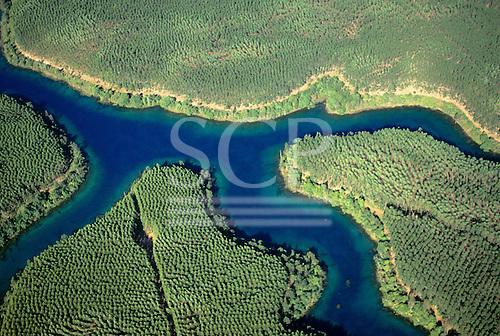 Aracruz, Brazil. Aerial view of eucalyptus plantation.
