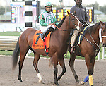 Csaba post parade. Graybar with Edgar Prado wins the 57th running of the Grade 1 Donn Handicap for 4 year olds & up, going 1 1/8 mile, at Gulfstream Park.  Trainer - Todd Pletcher.  Owner - Twin Creek Racing Stable