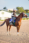 HALLANDALE BEACH, FL - JANUARY 14:   <br /> California Chrome with exercise rider Dihigi Gladney after breezing 5 furlong at Gulfstream Park. (Photo by Arron Haggart/Eclipse Sportswire/Getty Images