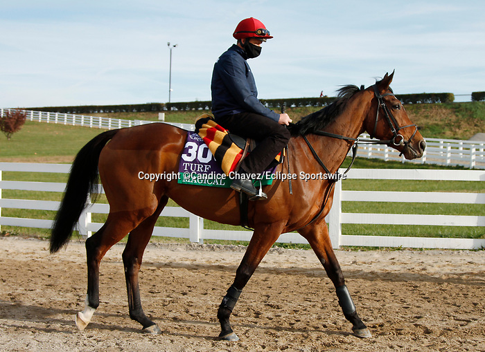Magical, trained by trainer Aidan P. O'Brien, exercises in preparation for the Breeders' Cup Turf at Keeneland Racetrack in Lexington, Kentucky on November 5, 2020.