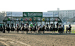 Feb 2010: Horses leave the gate at the start of the Risen Star Stakes at the Fairgrounds in New Orleans, La.