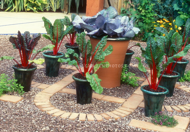 Swiss chard in pretty ceramic pots with a larger container of blue cabbages on patio in yard