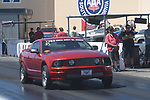 Mustang Maddness