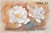 Franco, FLOWERS, BLUMEN, FLORES, paintings+++++,ITZP23,#f#, EVERYDAY