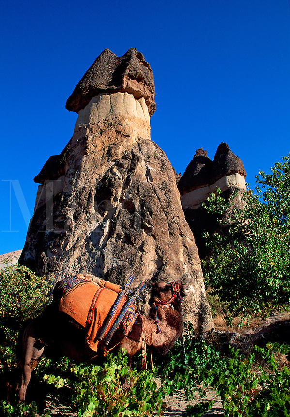 Eroded earth formations with camel Central Anatolia Region Cappadocia Turkey.