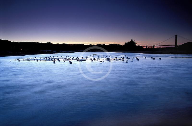 California, San Francisco, Tidal marsh at sunset with bridge, Crissy Field