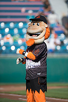 San Jose Giants mascot Gigante before a California League game against the Lancaster JetHawks at San Jose Municipal Stadium on May 12, 2018 in San Jose, California. Lancaster defeated San Jose 7-6. (Zachary Lucy/Four Seam Images)