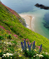 Wildflowers and  Coastline. Man O War Bay. Dorset Coast. Jurassic Coast, England