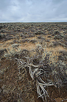 Sage lands degraded by grazing. Sublette County, Wyoming. March.