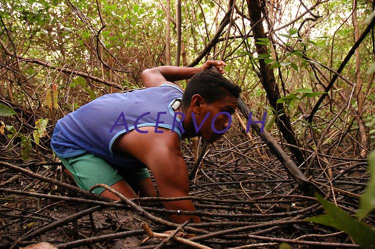 Manguezais na ilha do Marajó.<br /> Soure, Pará, Brasil.<br /> Foto Paulo Santos<br /> 2006