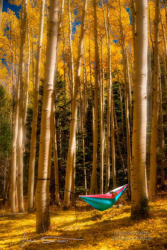 Autumn Glow, Inner Basin Trail  © 2017 James D Peterson.  A lone hammock, with a pony tail hanging out, makes an idyllic autumn scene among the aspens in Arizona's Coconino National Forest.
