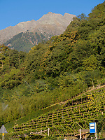 Weinbau bei Parkplatz Töll, Oberplars, Algund bei Meran, Region Südtirol-Bozen, Italien, Europa<br /> wine growing near parking Töll, Oberplars, Lagundo near Merano, Region South Tyrol-Bolzano, Italy, Europe