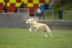 Search dogs locate a victim in the Urban Search and Rescue demonstration in Swansea today. The USAR is managed by the Chief Fire Officers Association (CFOA) on behalf of the UK Government.