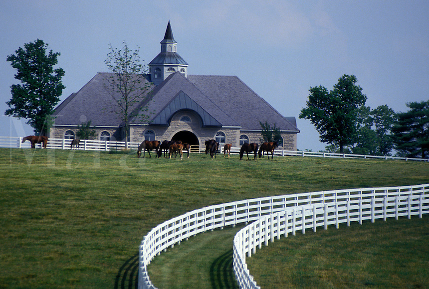 horse, Lexington, KY, Kentucky, Blue Grass Country, Horses graze in a pasture on a horse farm in the bluegrass country of Lexington.